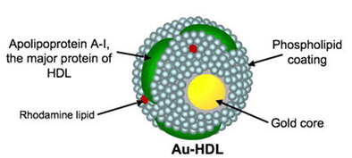 Illustration of gold core nanoparticle