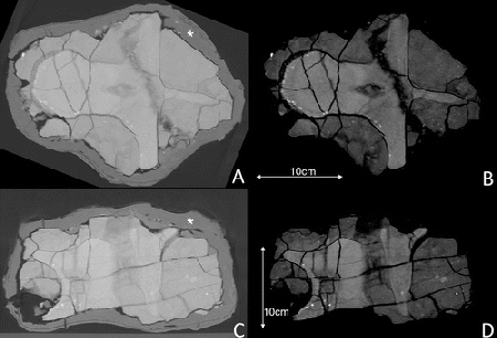 CT of the dinosaur fossil