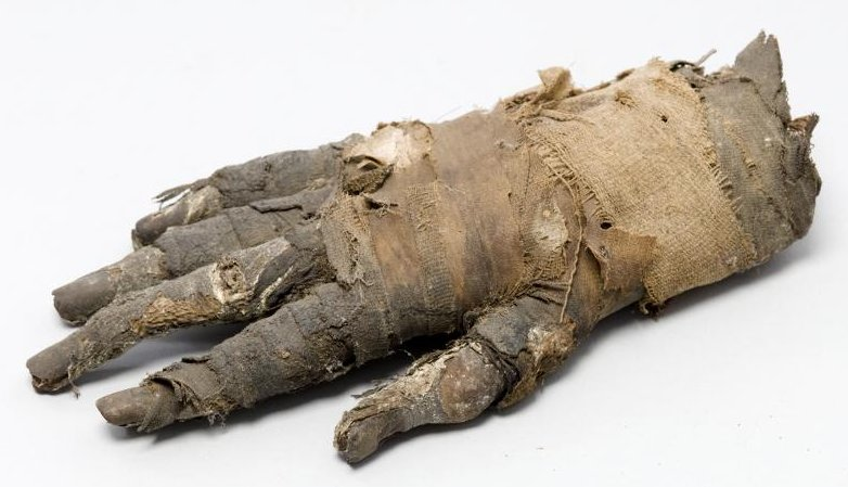 Mummified hand of an Egyptian man from 400 B.C.