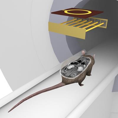 Russian group pursues high-resolution MRI coils